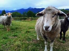 Farm Animal Experience