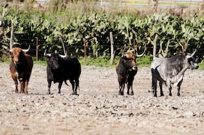 Private Tour: Brave Bull Ranch & Medina Sidonia from Seville