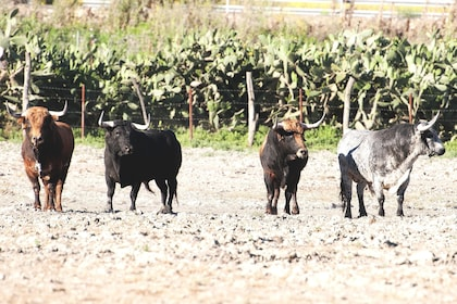 Wild bulls in the countryside of Andalusia