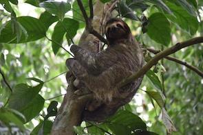 Sloth Adventure