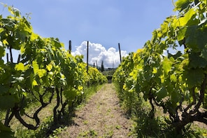 Small Group Frascati Wine Experience with Lunch by train