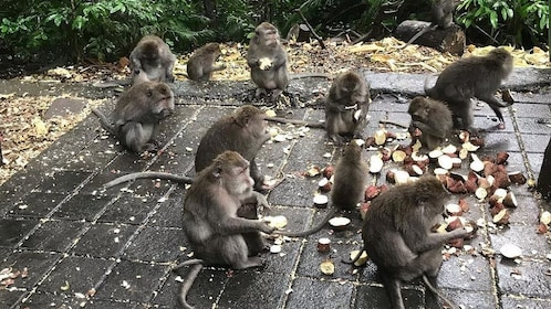 Monkey Forest in Ubud.jpg