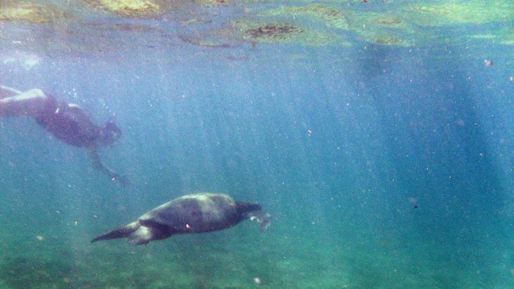 Show item 2 of 4. Half-Day Tour to Tintoreras Islet in Isabela - Galapagos