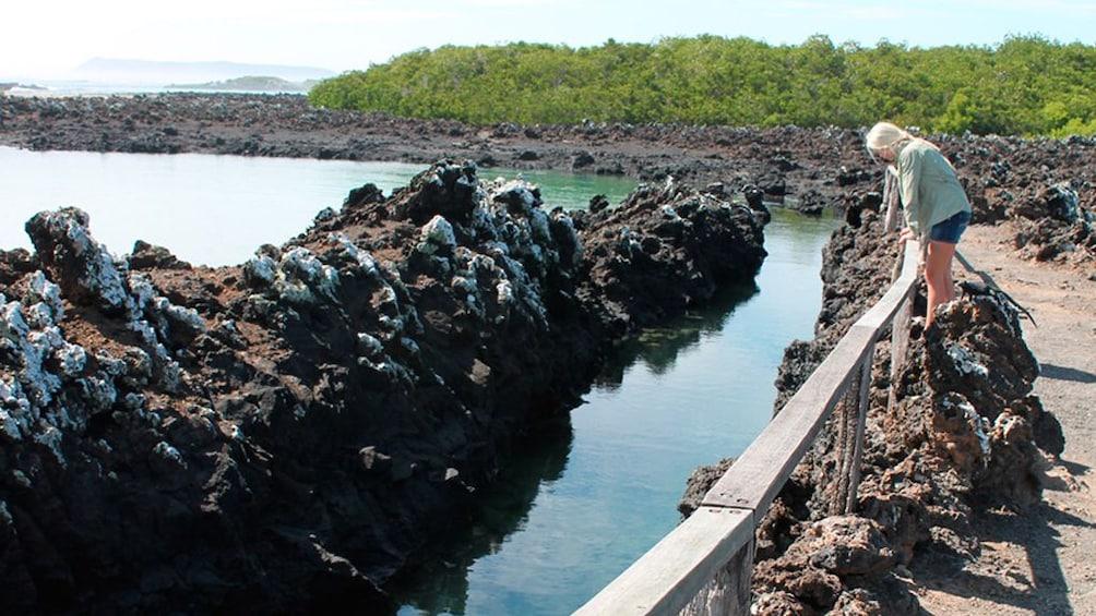 Show item 1 of 4. Half-Day Tour to Tintoreras Islet in Isabela - Galapagos