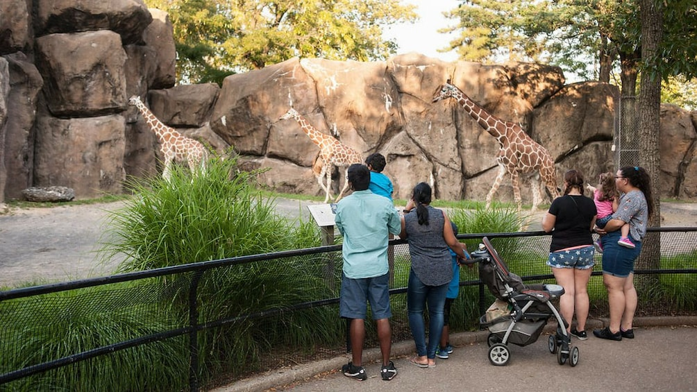 Show item 3 of 9. Family looking at giraffes at the Philadelphia Zoo