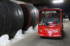 Cricova winery with wine tasting. Group excursion