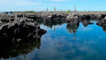 Half-Day Trip to Los Tuneles Cabo Rosa in Isabela Galapagos