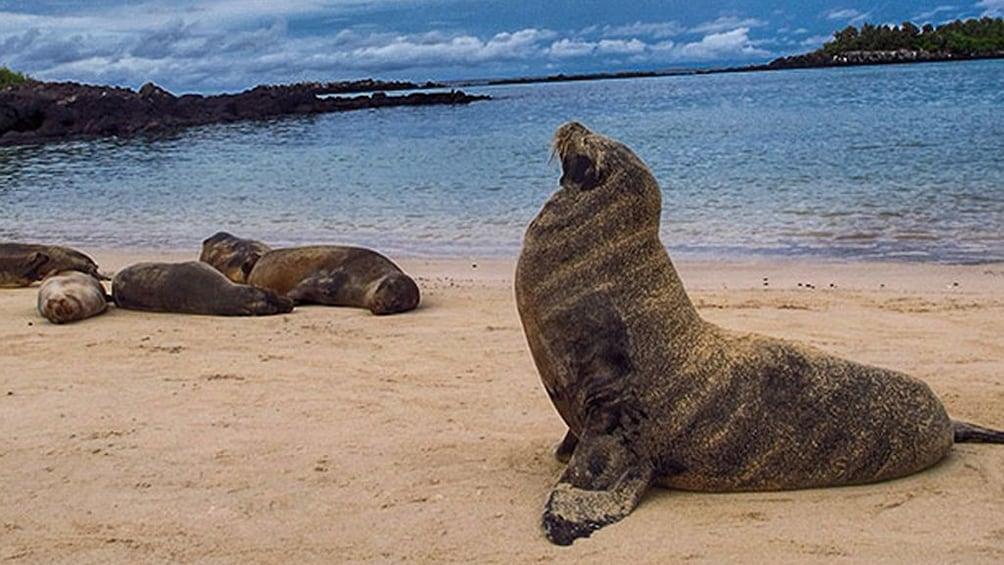 Show item 2 of 5. Galapagos Boat Tour: Santa Fe + South Plazas Islands