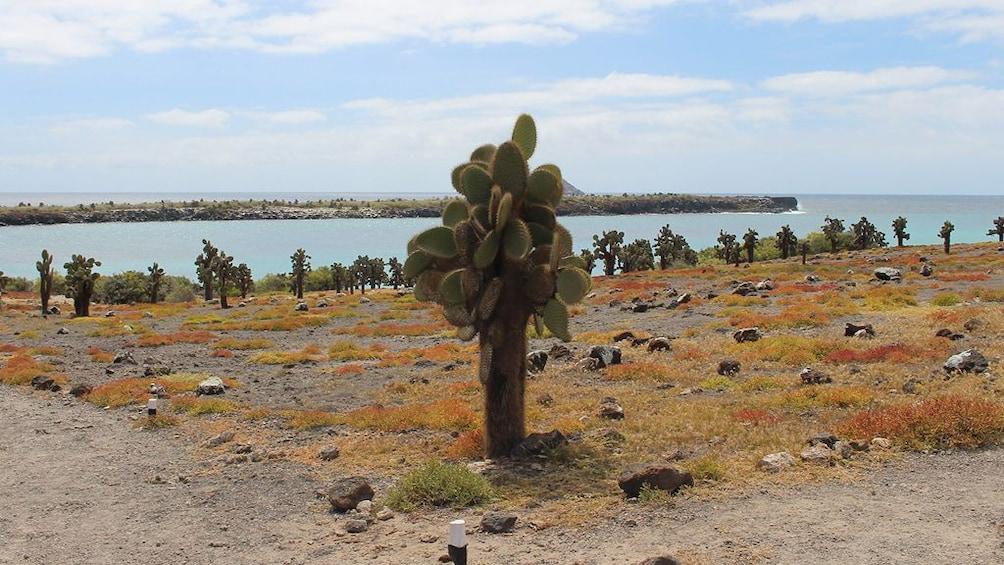 Show item 1 of 5. Galapagos Boat Tour: Santa Fe + South Plazas Islands