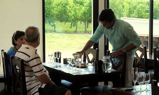 Guided tour and wine tasting at Pizzorno wineries
