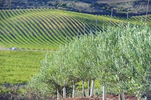 Olive oil mill and winery visit in Navarre in small groups