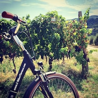 E-Bikes Florence Vineyard and Olive Grove Experience