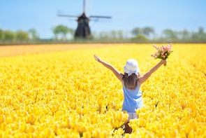 Tulip fields, Windmills and Local Experiences Tour