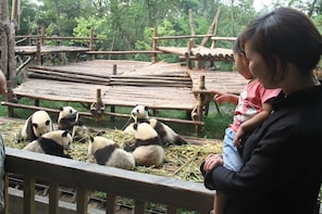 Chengdu Panda Research Base Half Day Private Tour