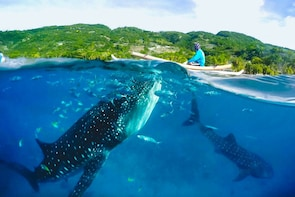 Oslob Whale Shark Encounter with Tumalog Falls - Shared Tour