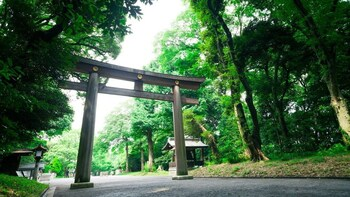 Meiji Jingu Shrine Highlights with National Licensed Guide