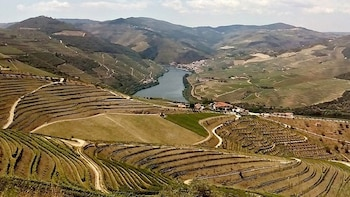 Private - Full-Day Douro Valley Private Wine Tour with Lunch