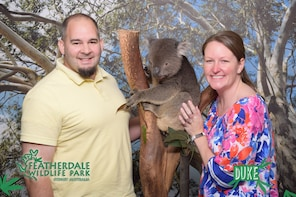 Kangaroos & Koala encounter (Half day tour)