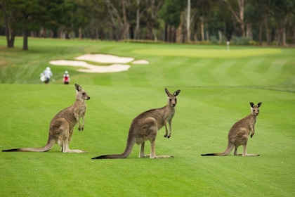 Southern Highlands Private Tour (Wildlife, Waves and Wines)