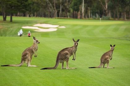 Kangaroo valley tour.jpg