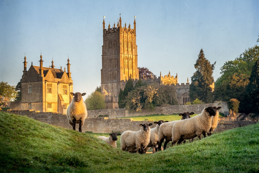 Sheep with castle in the background in England