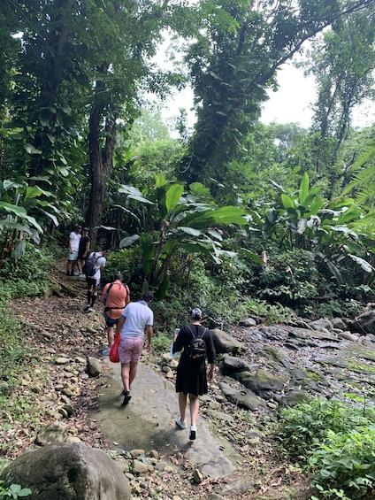 Trio Tour: Rainforest River - Beach - Bio Bay Kayaking