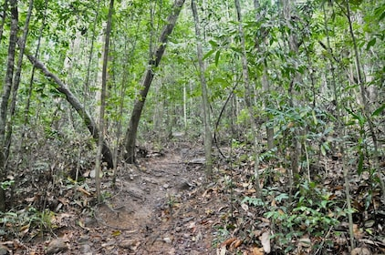 Guided Nature Trail to Hiyare Forest