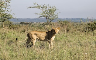 3 DAYS 2 NIGHTS BUDGET SAFARI TO MAASAI MARA NATIONAL PARK