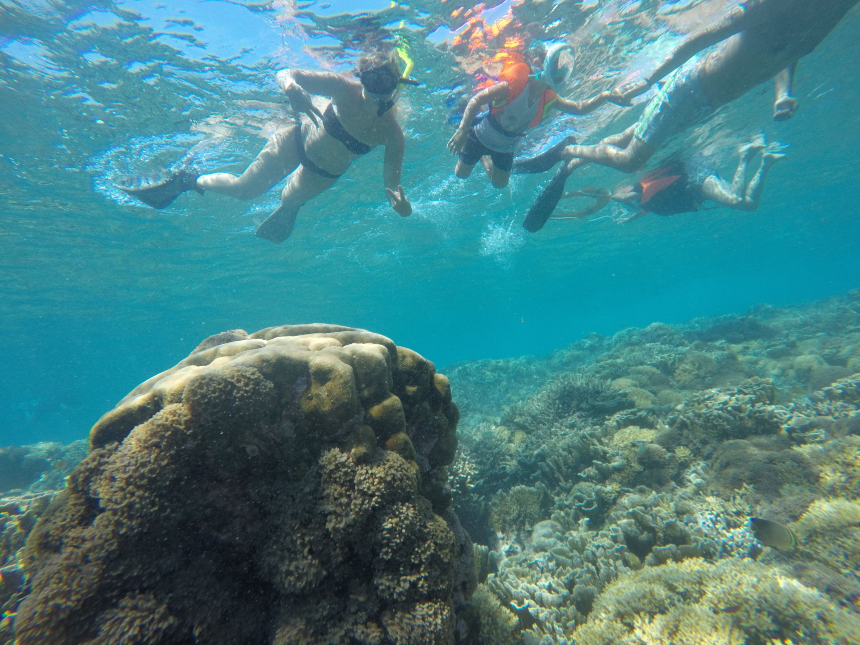 3 Gili Snorkeling Tour ( 3 Island Visit in A Day )