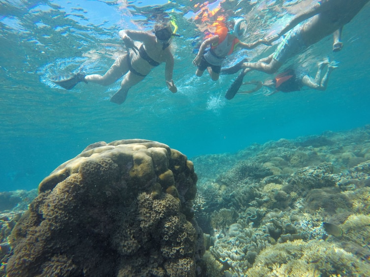 Show item 1 of 5. 3 Gili Snorkeling Tour ( 3 Island Visit in A Day )