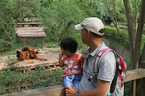 Full-Day Panda Research Base and Chengdu Area Private Tour