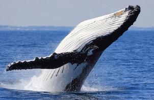 Whale Watching & Bacardi Beach Island with Swimstop