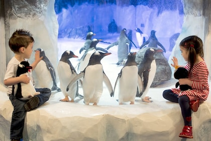 Two children sit next a penguin exhibit at Sea Life Birmingham