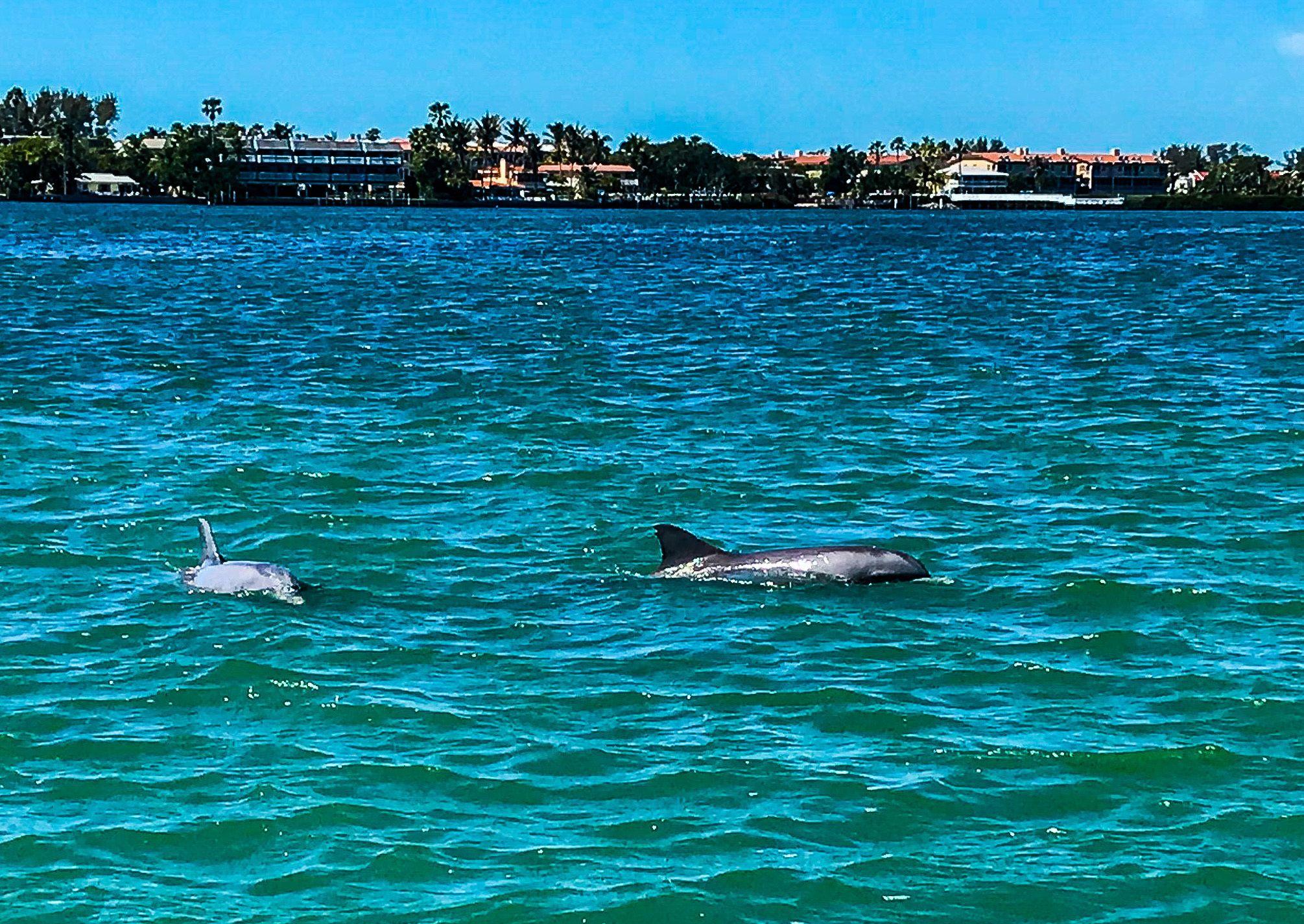 2 Hour Dolphin Cruise