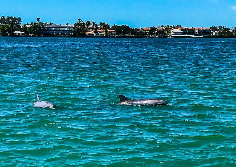 Show item 1 of 5. 2 Hour Dolphin Cruise