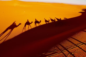 Private 4 Days From Fes to the Sahara until Marrakech