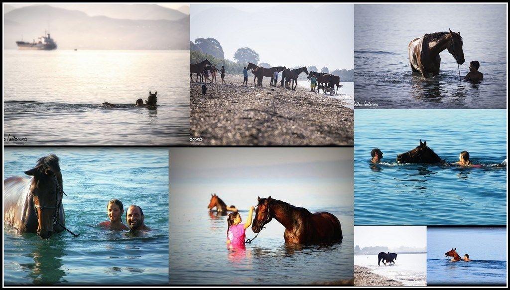 Swim with a Horse in Kalamata