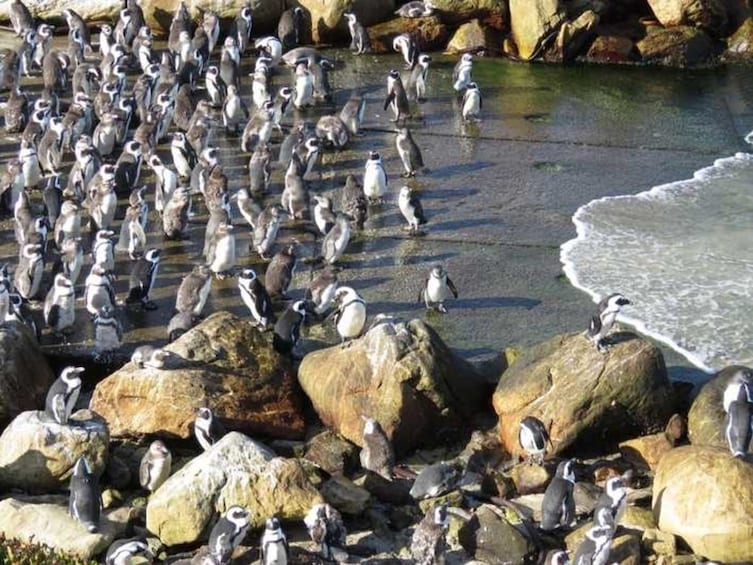 Show item 5 of 5. Cape Agulhas & Winelands full day tours