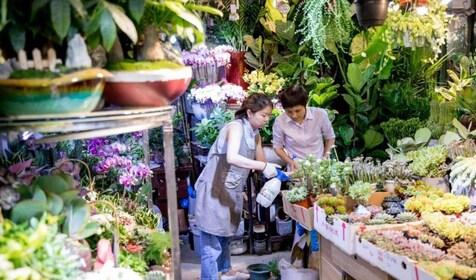 Flower Birds Market.jpg