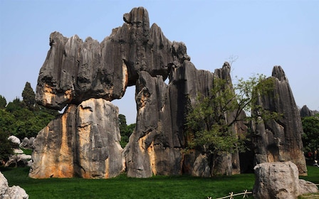 Stone Forest.jpg
