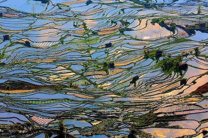 Yuanyang Rice Terraces A.jpg