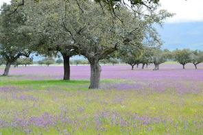 Extremadura Paradise