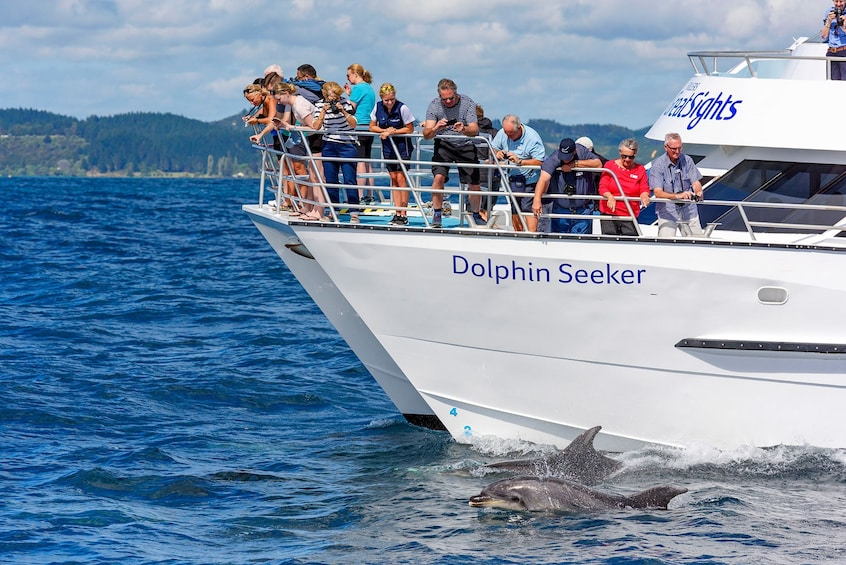 Show item 5 of 5. Tourists look over edge of cruise ship at dolphins in New Zealand