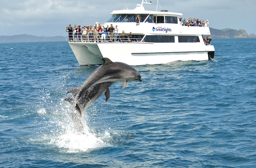 Show item 4 of 5. Dolphin breaches with cruise ship nearby in New Zealand
