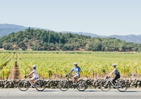 Full-Day Napa Valley Bike Tour with Picnic Lunch
