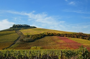 Small-Group Wine Tour in the Tuscan Hills from Lucca