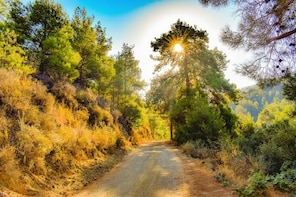 Treasures of Troodos from Paphos and Limassol
