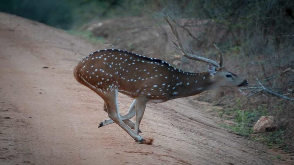 Show item 5 of 10. Yala National Park Safari from Galle & Weligama
