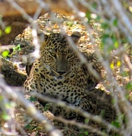 Yala National Park Safari from Galle & Weligama