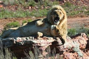 Big 5 Safari Full Day- Aquila Game Reserve